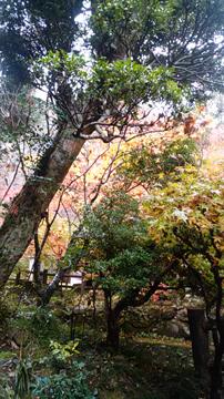 2017秋祭り4.jpg