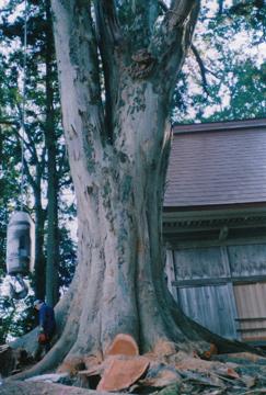 樹3.jpg