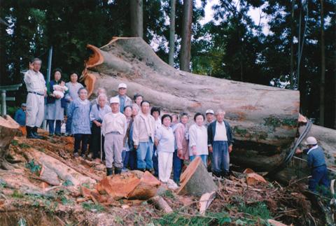 樹4.jpg