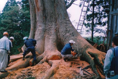 樹5.jpg